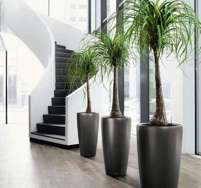 Mejores plantas de interiores para el hogar - Mejores plantas para interior ...