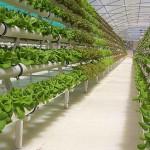 Hidroponia o Cultivos Sin Tierra – Definicion, Usos y Ventajas